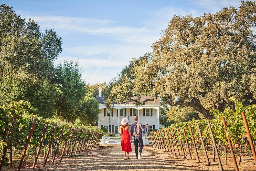 Oak Farm Vineyards, Lodi, CA Oak Farm Vineyards, Lodi, California