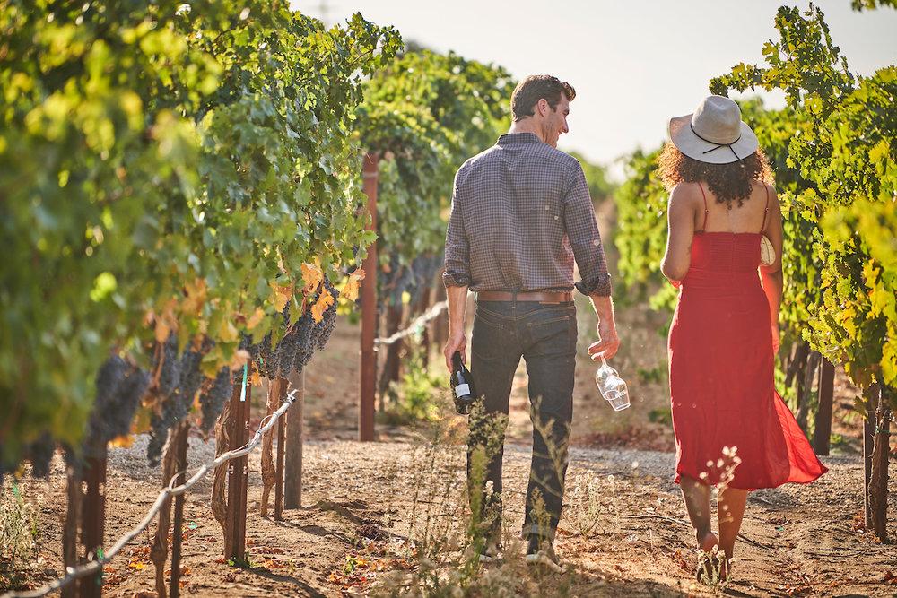 Oak Farm Vineyards, Lodi, California