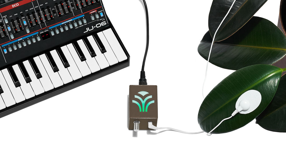 Bioplastic_Midi-Sprout_Connected_To_Synth_Final_Brown.jpg