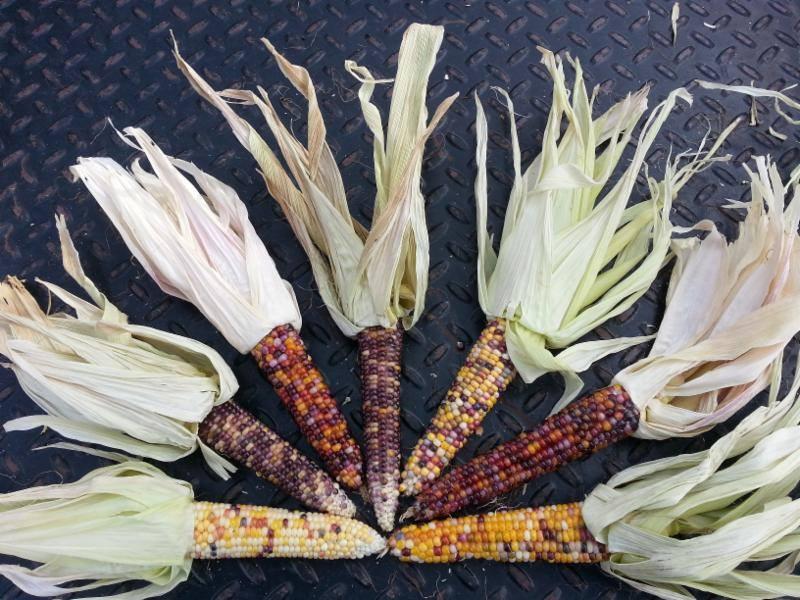 corn-2017-mt-shasta-farmers-market.jpg
