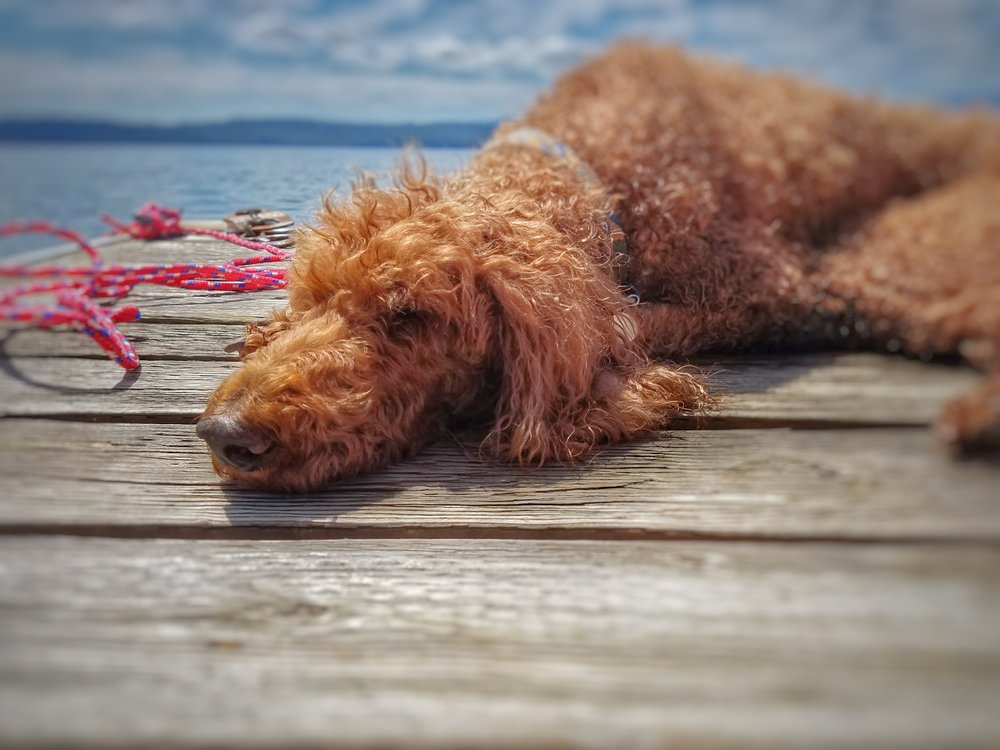 lucy on dock.jpeg