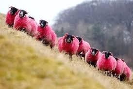 SHEEP 4.jpg
