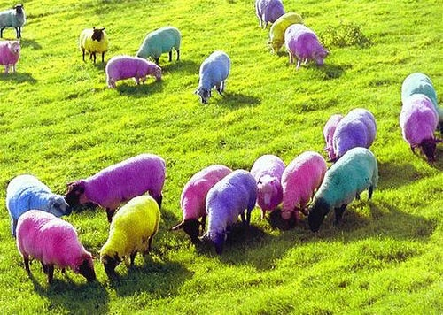 pastel-colored-sheep.jpg
