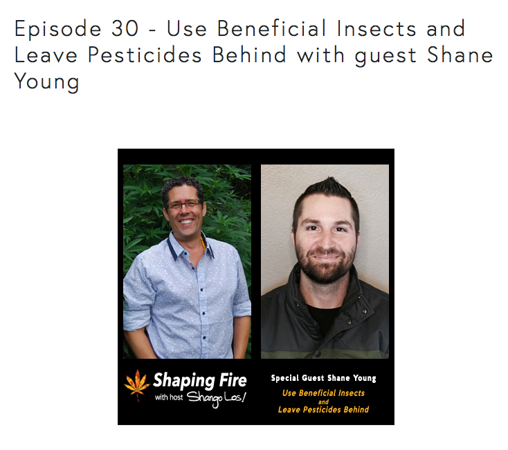 shaping fire podcast