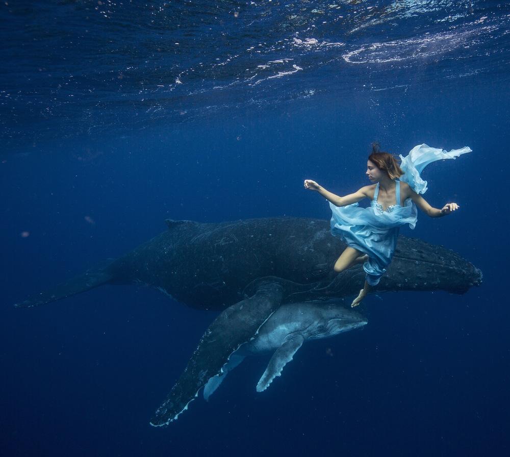 tara-humpbacks-2014-441.jpg