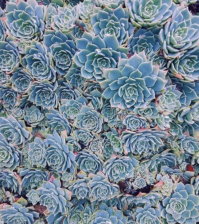 Mhm, some succulent goodness just because 🌿 📸: @zeldah__