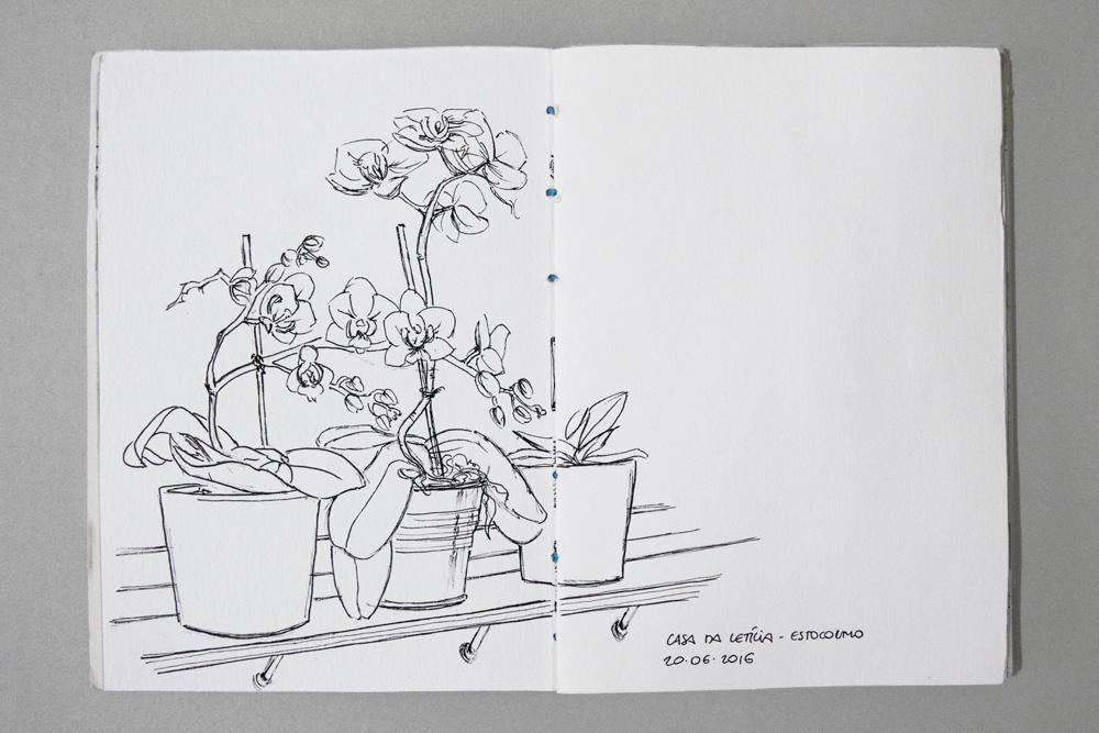 orquideas.jpg