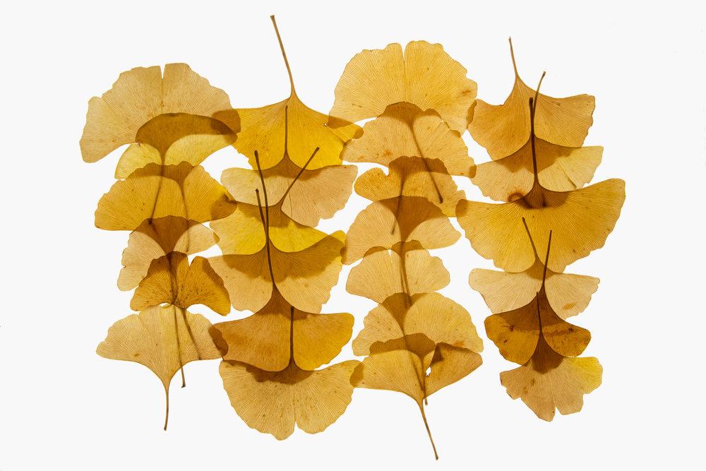 leaf-9.jpg
