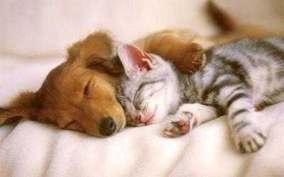 CatDogFriends_J.jpg