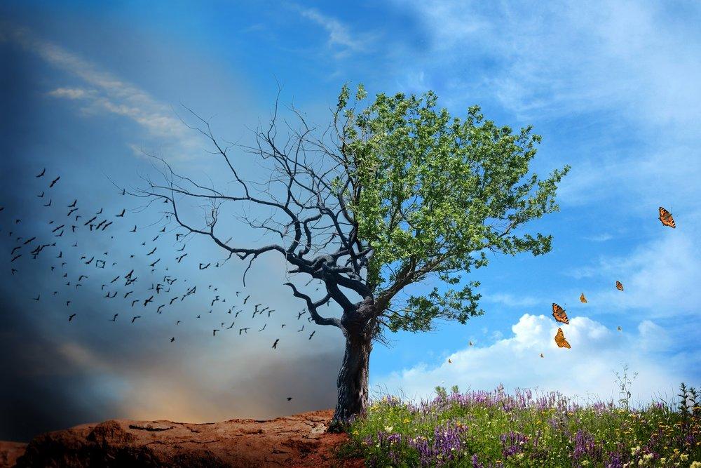 EASTER TREE IMAGE 1200px.jpg