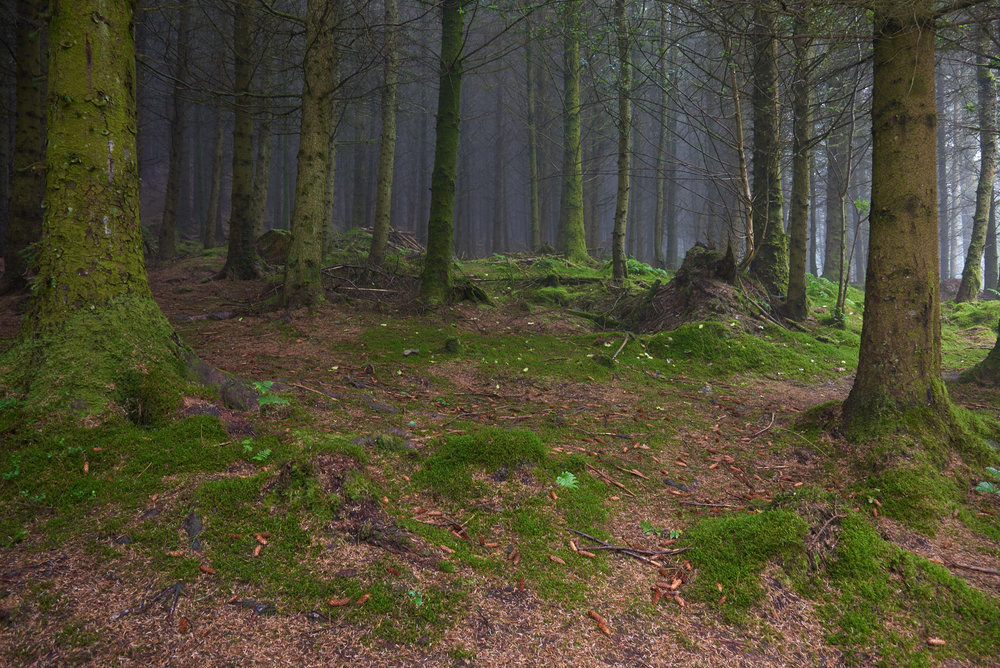 Untitled, Lake District, 2015