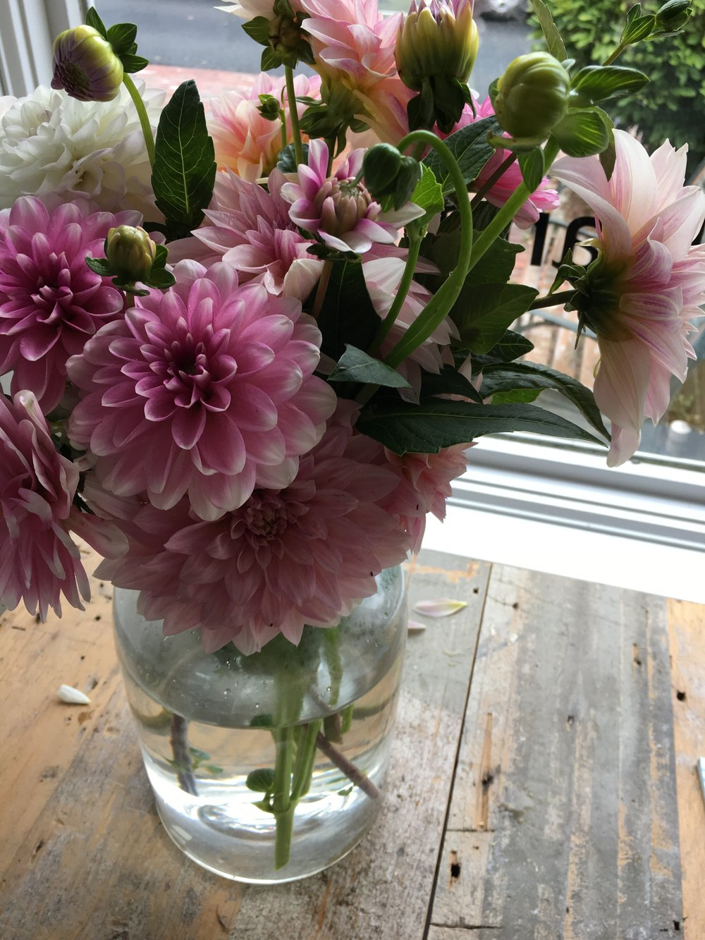 a big bouquet of dahlias in the gallery window. saving the blooms from being drenched and windblown by #jose