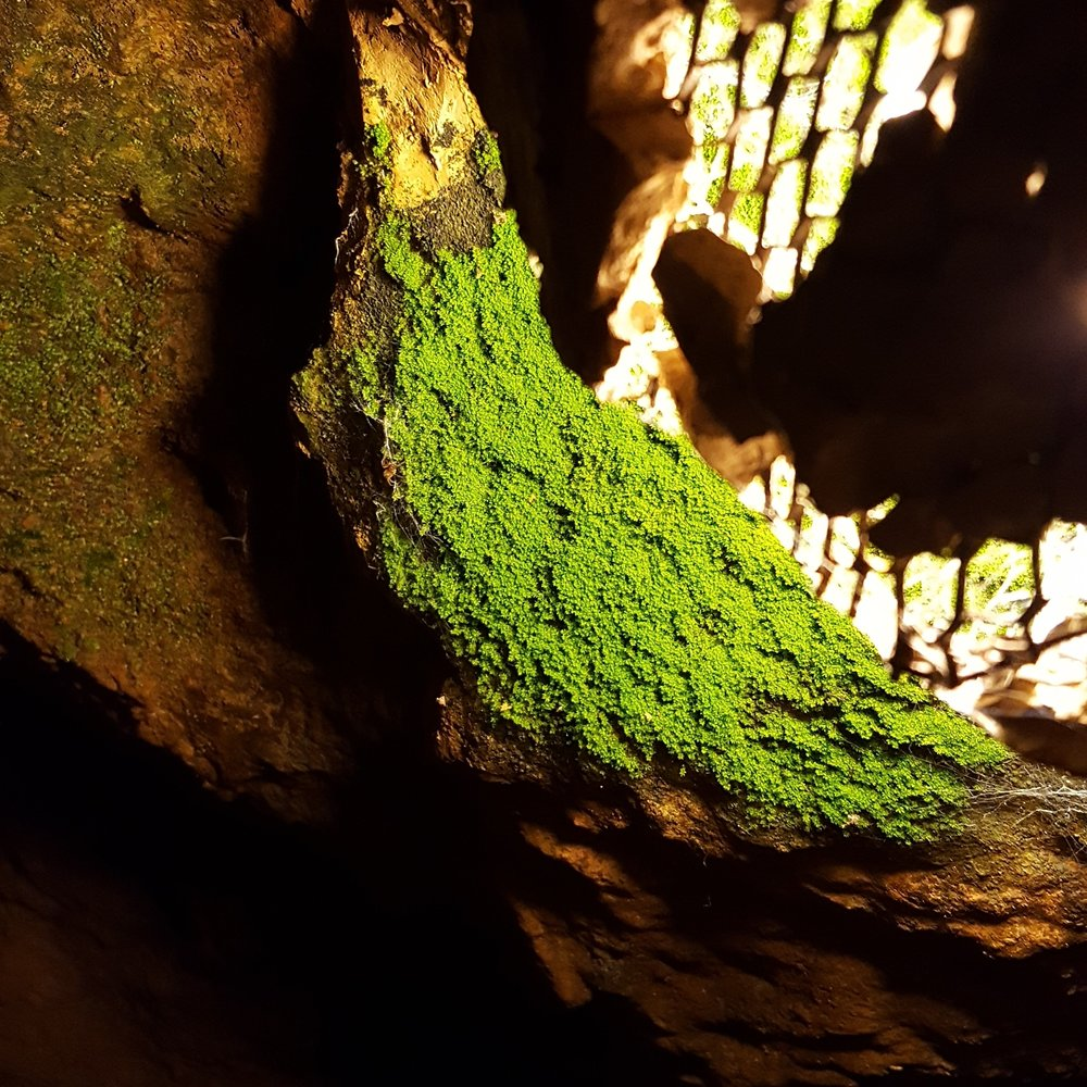 Moss Grows Near the Lights - Warmth!