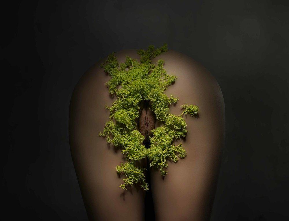 Moss Muff.jpg