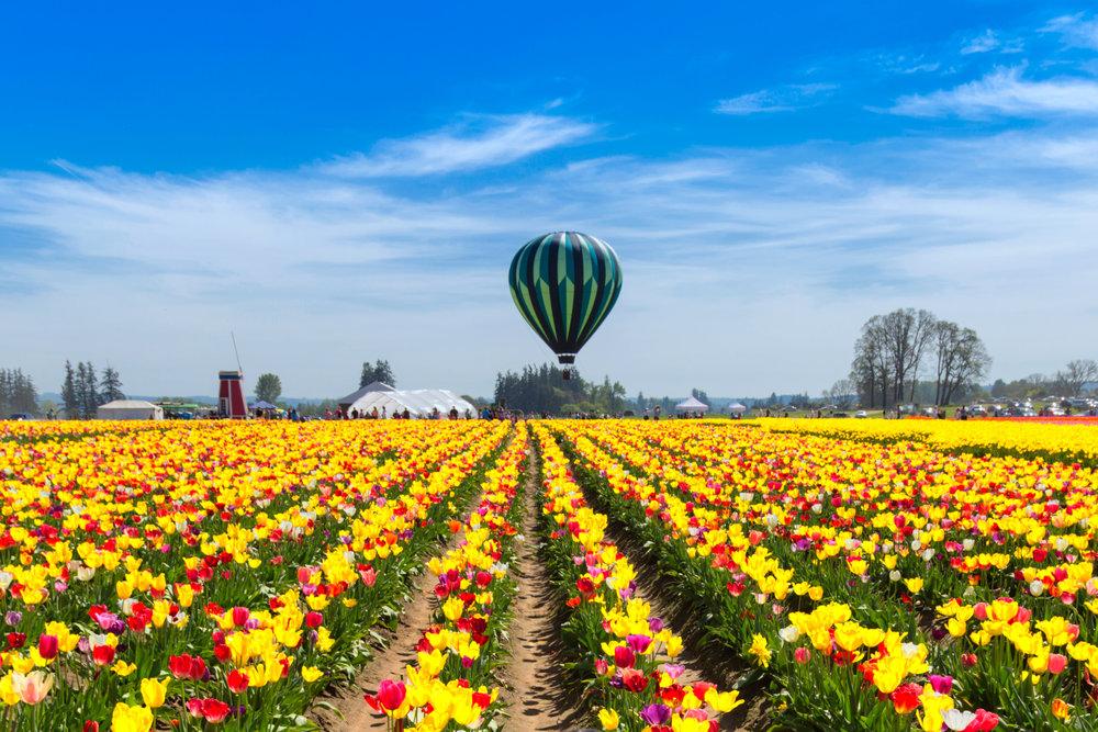 Wooden Shoe Tulip Farm - Portland, OR