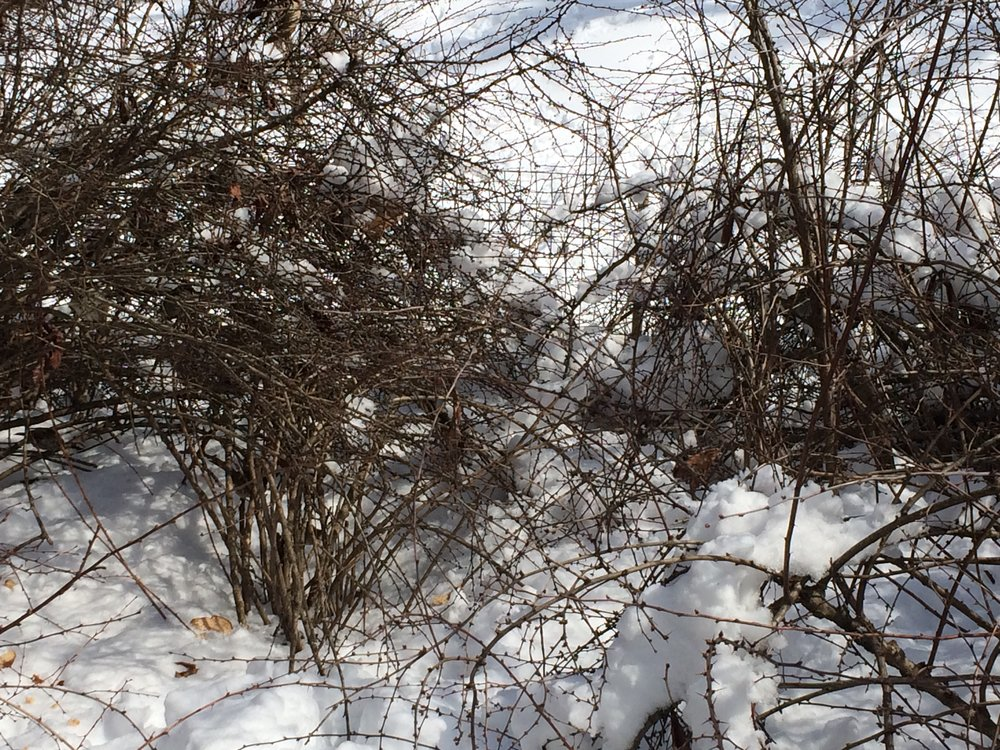 Traces&Branches.JPG