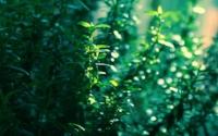 fullscreen-nature-wallpaper-tumblr-tumblrwindows-backgrounds-macronature-768x480.jpg