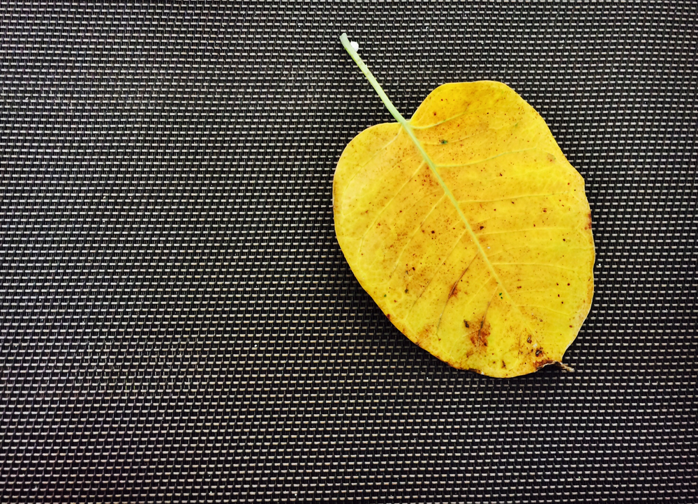 Leaf Picture.jpg