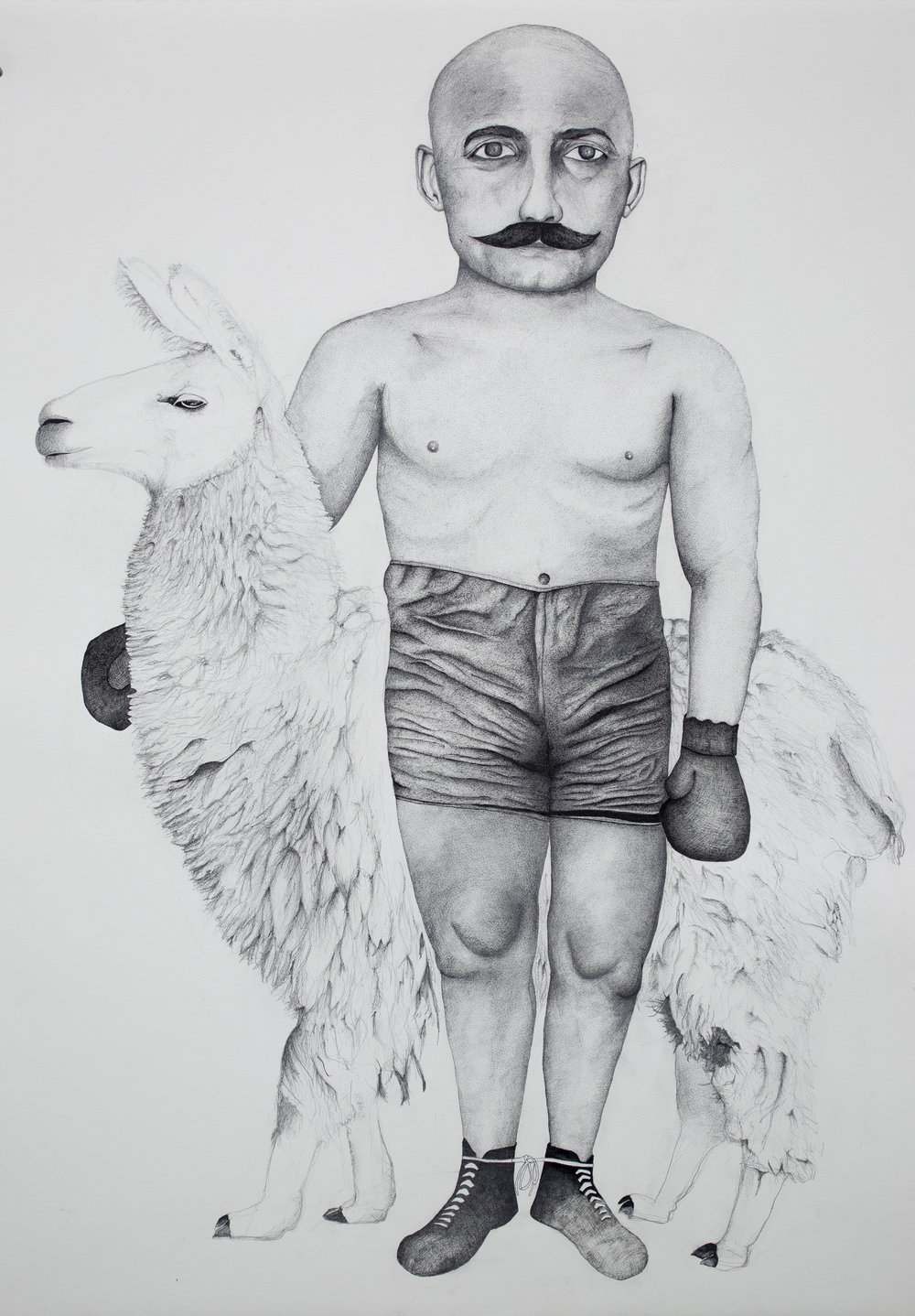 Boxer with Llama, 2018