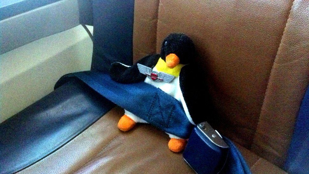 Pythia J. Penguin getting her wings. And you thought penguins couldn't fly!