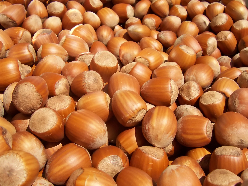 Seasonal Hazelnuts