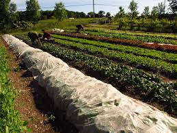 Small food farming agriculture