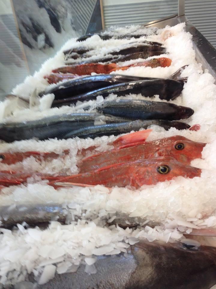 fishlineup.jpg
