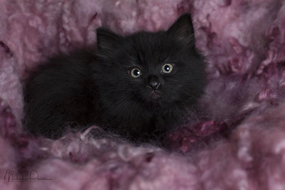 IMG_1867-Rescue-kittens.jpg