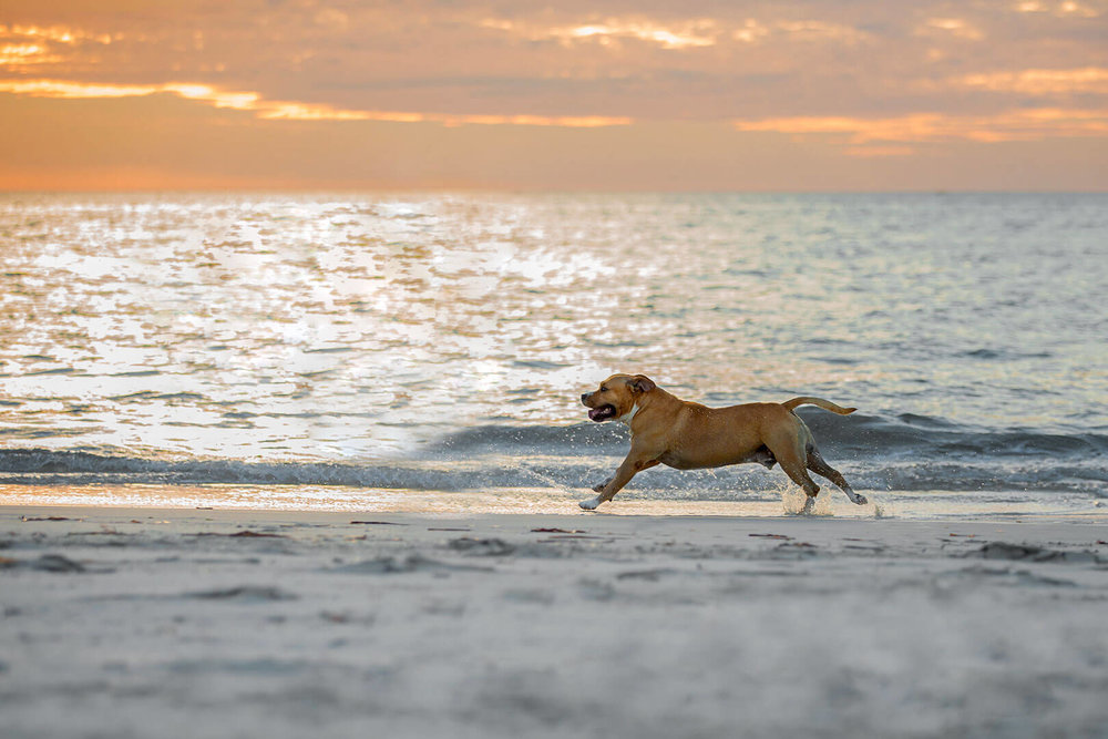 _PP_5419-doggie-beach-photos.jpg
