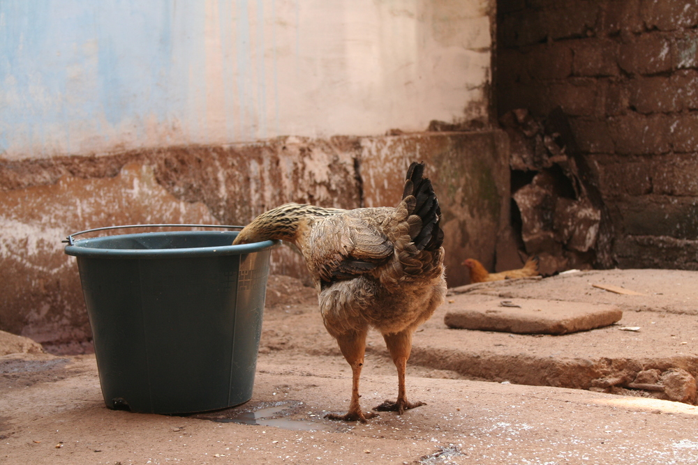 Morgengeräusche. Foto: Irene Mazza, Bafoussam, Kamerun
