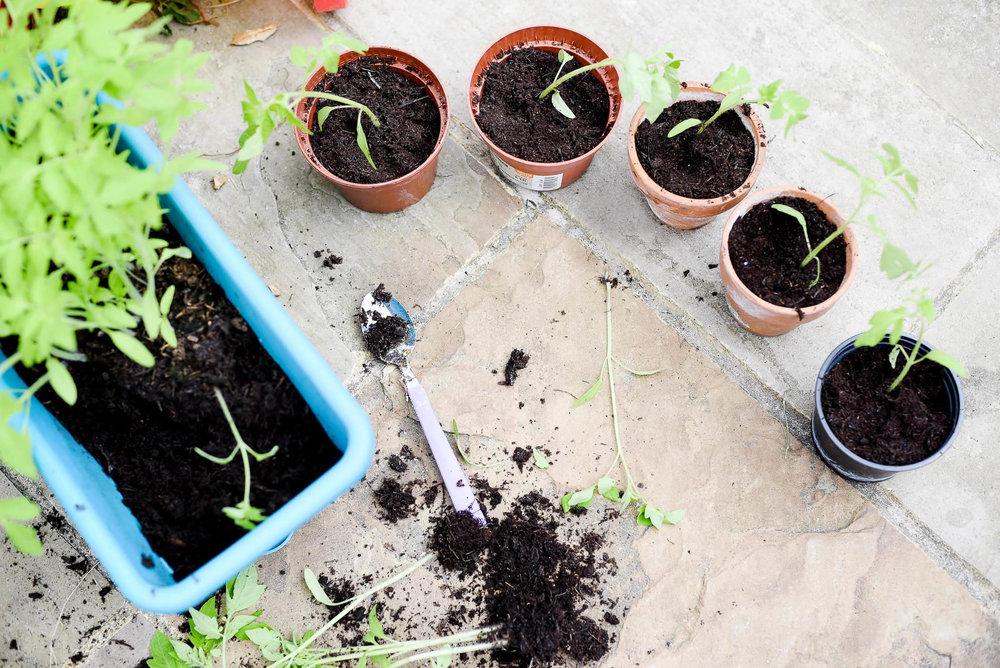 Planting Pots.jpg