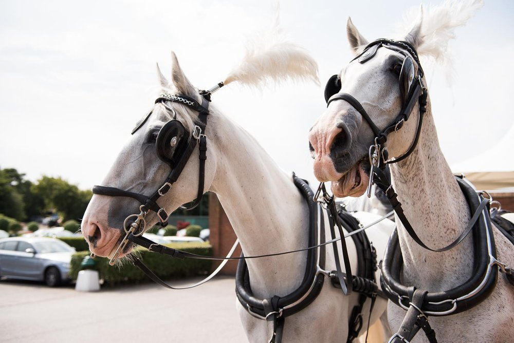 Horse drawn carriage at Essex wedding © Jessica Grace Photography.jpg