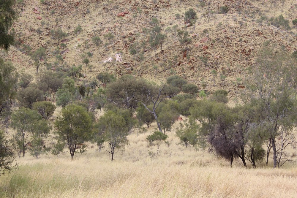 The MacDonnell Ranges near Alice Springs