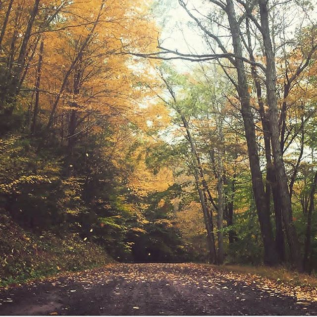 Those magical Pennsylvania moments that pull you over, yank you out of the car and right into the middle of the road. . . Fall, you sure are something special 🍂