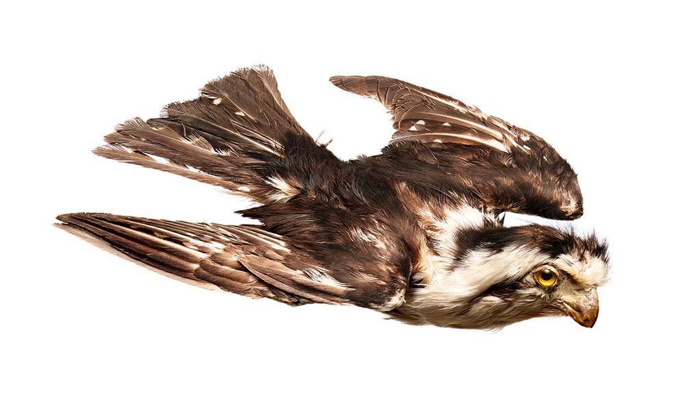 bird-domlee.jpg