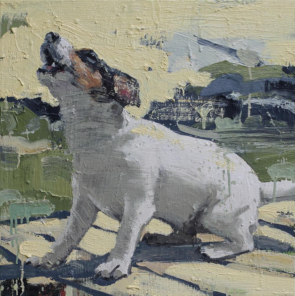 Studie av skjellende hund | 60x60 cm | Eggolje på lerret | Privat eie