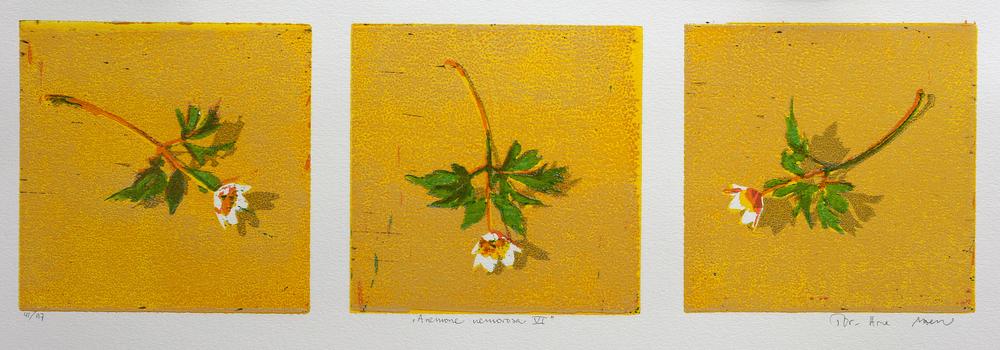 Anemone Nemorosa VI | Tresnitt | 15x50 cm | kr. 1500,-