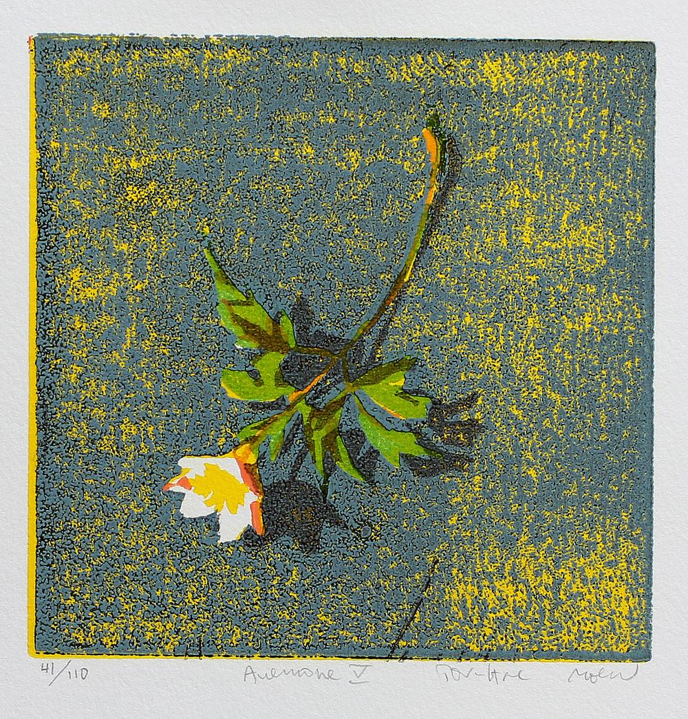 Anemone V | Tresnitt | 15x15 cm | kr. 600,-
