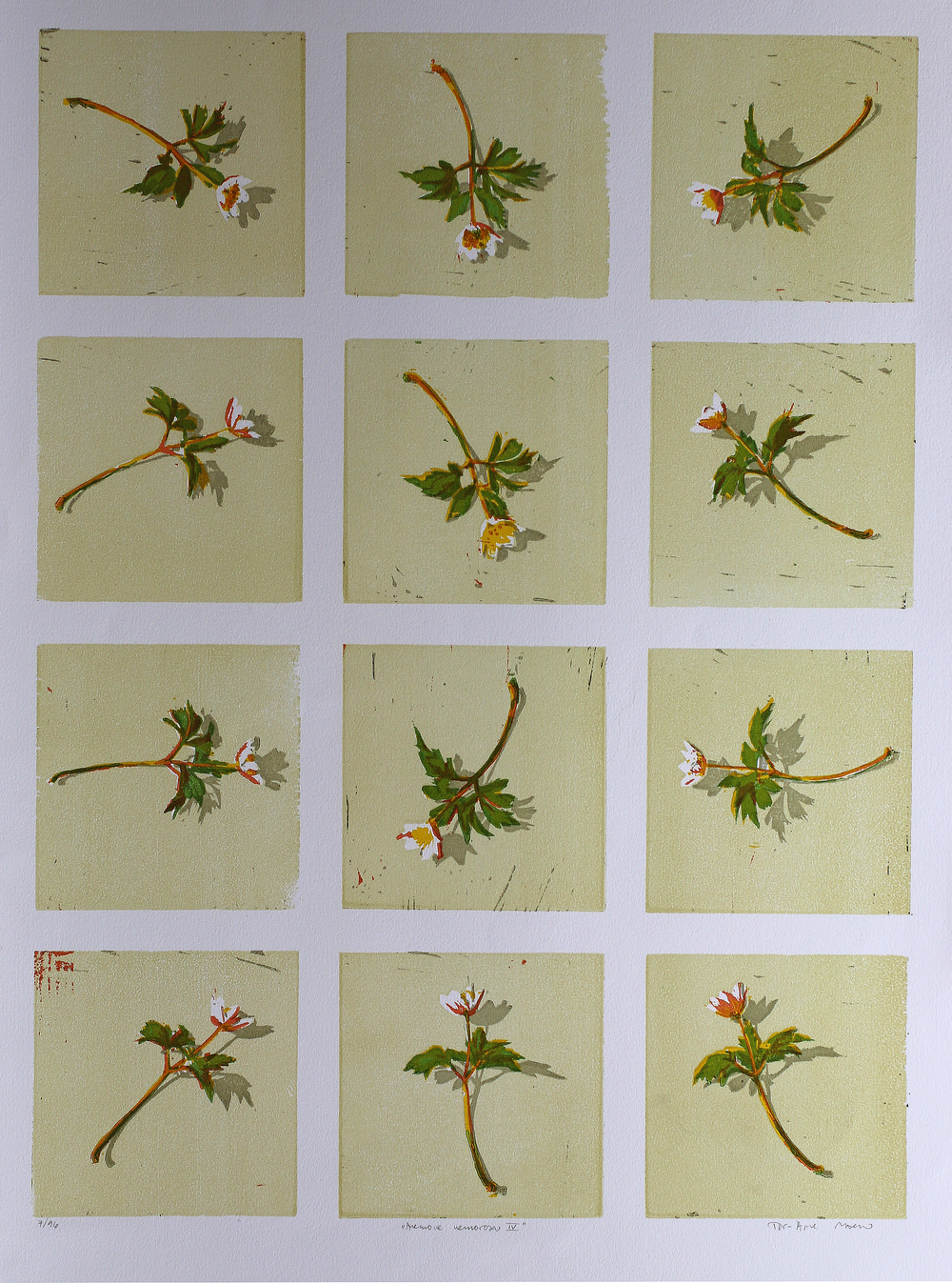 Anemone Nemorosa IV   Tresnitt   70x50 cm   kr. 4000,-