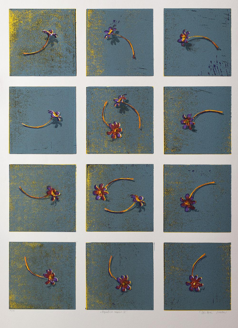 Hepatica Nobilis II  Tresnitt   70x50 cm   kr. 4000,-