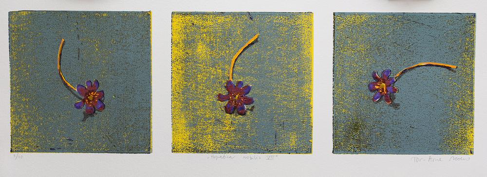 Hepatica Nobilis VII | Tresnitt | 15x50 cm | kr. 1500,-