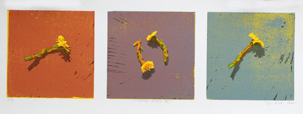 Tussilago Farfara XV | Tresnitt | 15x50 cm | kr. 1500,-