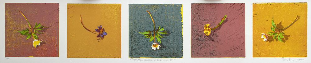 Tussilago, Hepatica & Anemone III | Tresnitt | 15x50 cm | kr. 2000,-