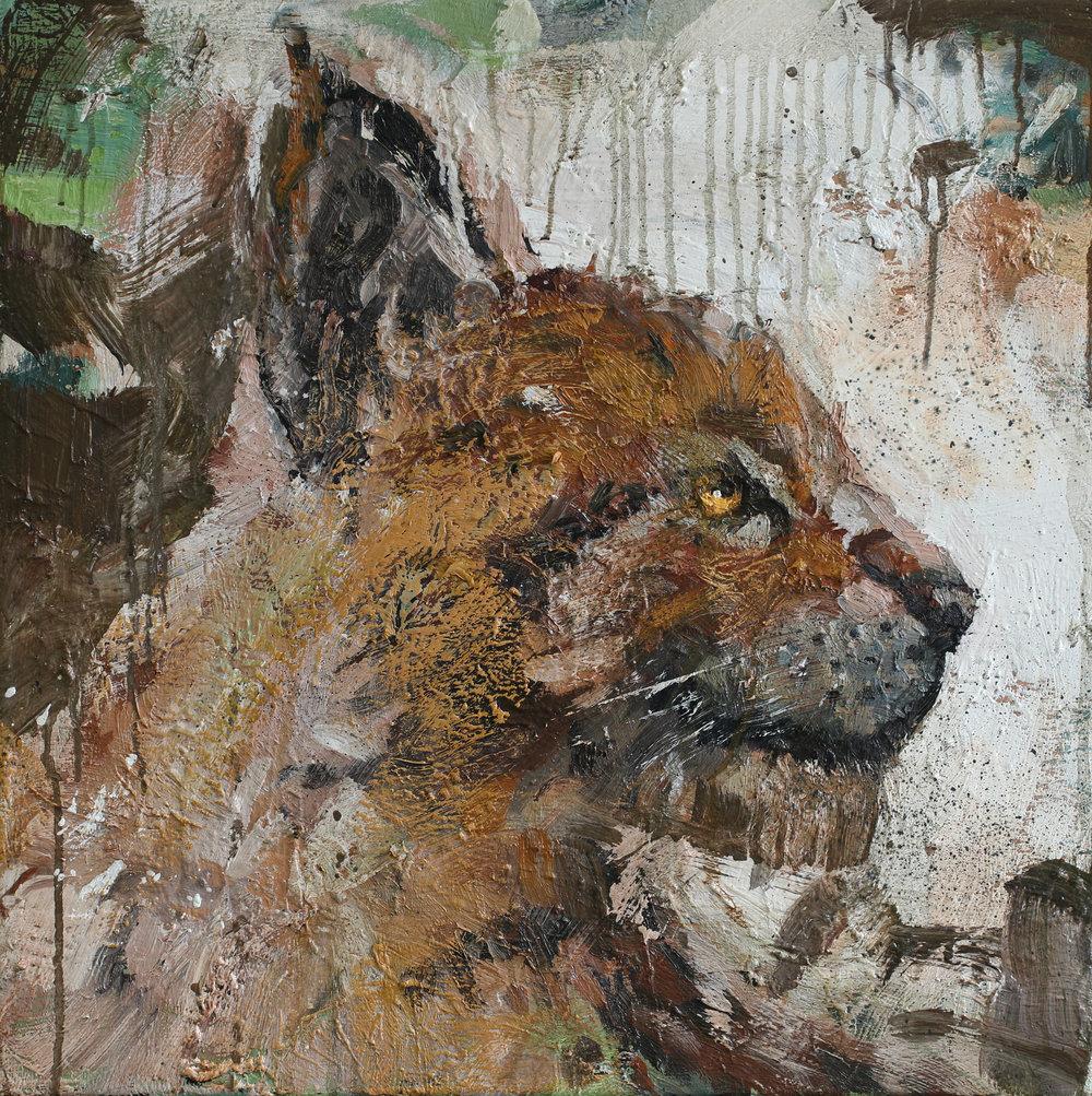Lynx lynx | 60x60 cm | Olje på lerret | kr. 15 000,-