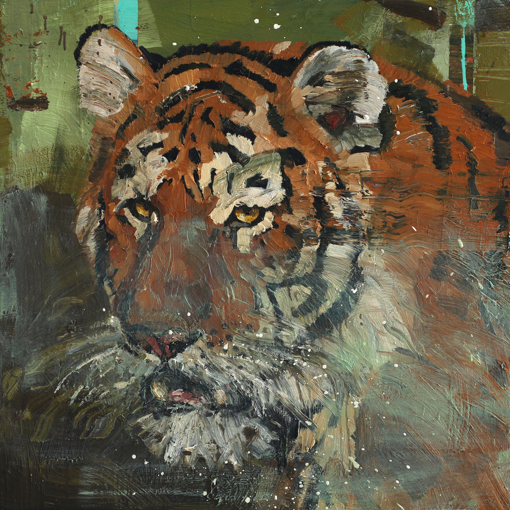 Panthera tigris | 80x80 cm | Olje på lerret | Privat eie