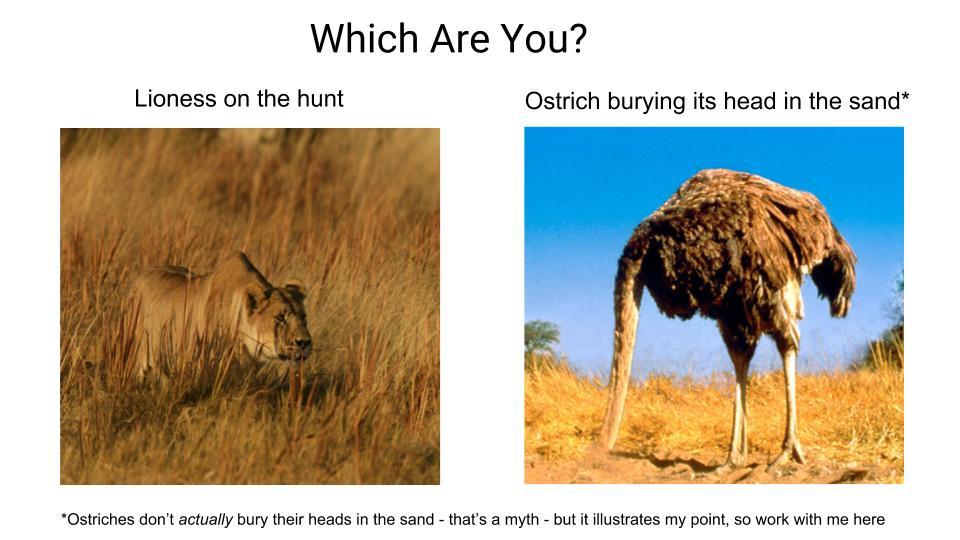 Ostrich vs Lion.jpg