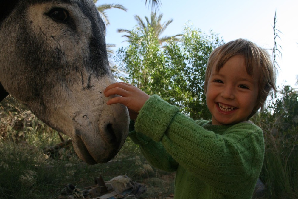 Donkey in Siwa