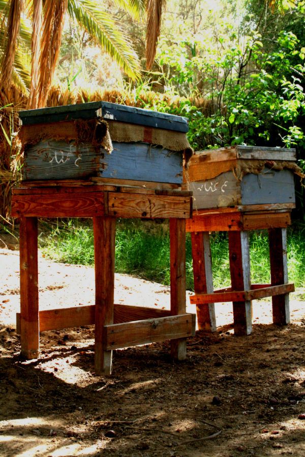 Our new bee hives in our garden farm.