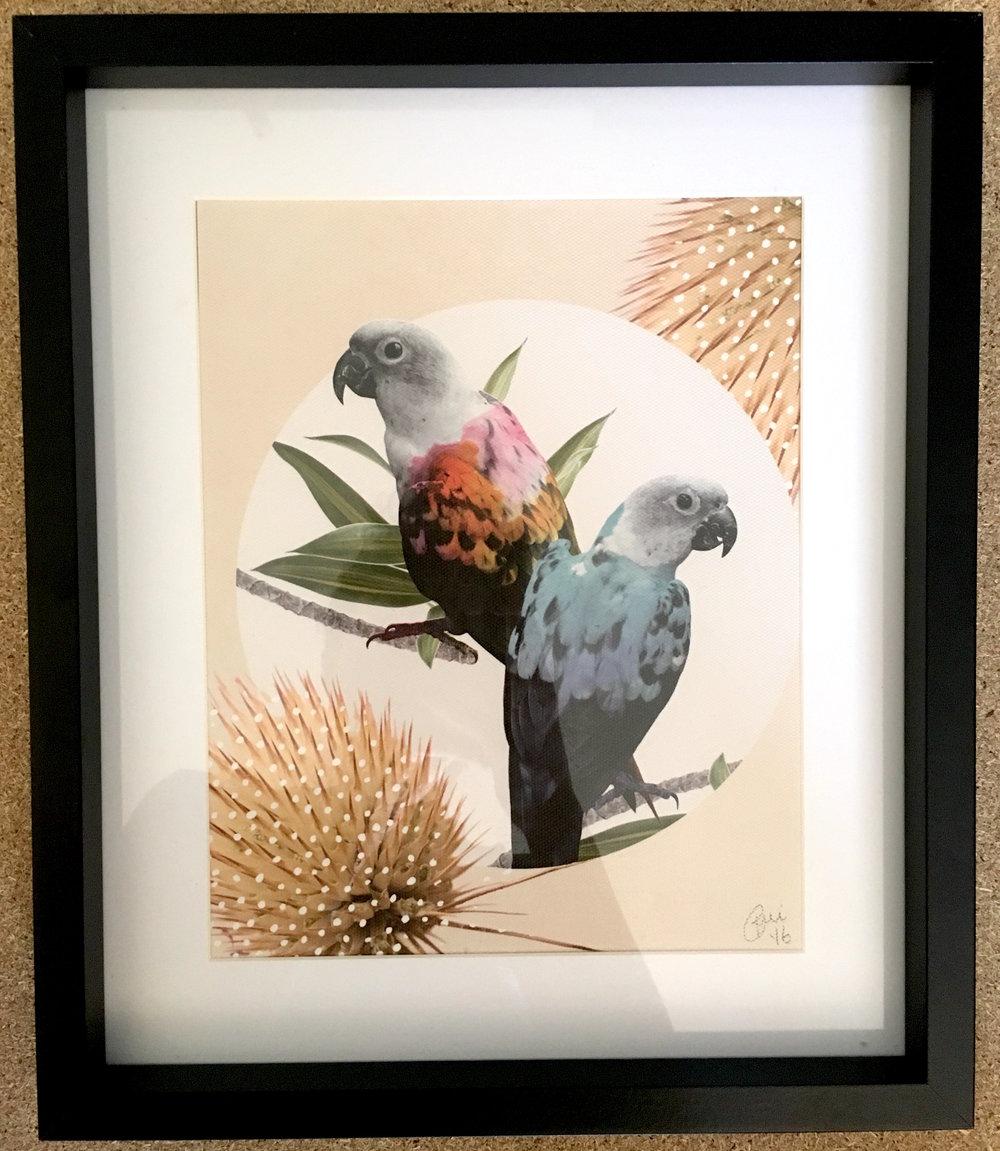 Jolly Parrots
