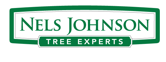 Nels Johnson Tree Experts